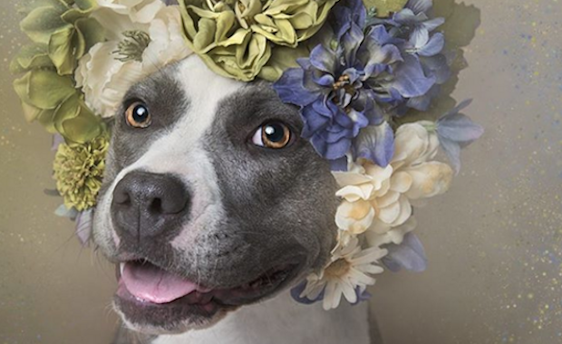 We Talk To Sophie Gamand About Her New Photo Project Flower Power Dog Flower Flower Power I Love Dogs