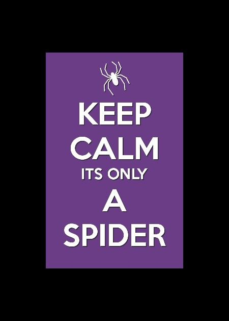 I hate spiders if u do too look at this !❇❇✳♥♥♥♥♥♥♥♥♥♥♥♥