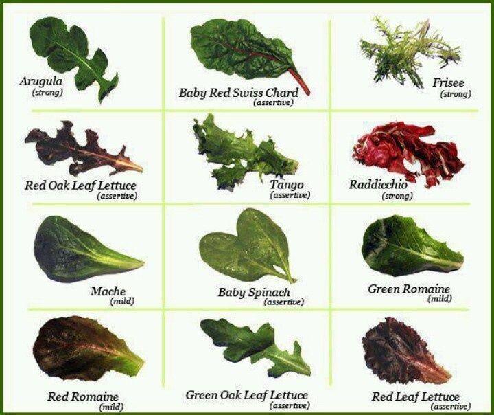 Lettuce Types Chart Lettuce Varieties Types Of Lettuce