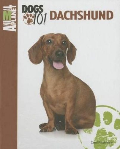 The Intelligent And Determined Dachshund Is A Playful And