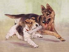GERMAN SHEPHERD AND WIRE FOX TERRIER DELIVER NEWSPAPER DOG GREETINGS NOTE CARD
