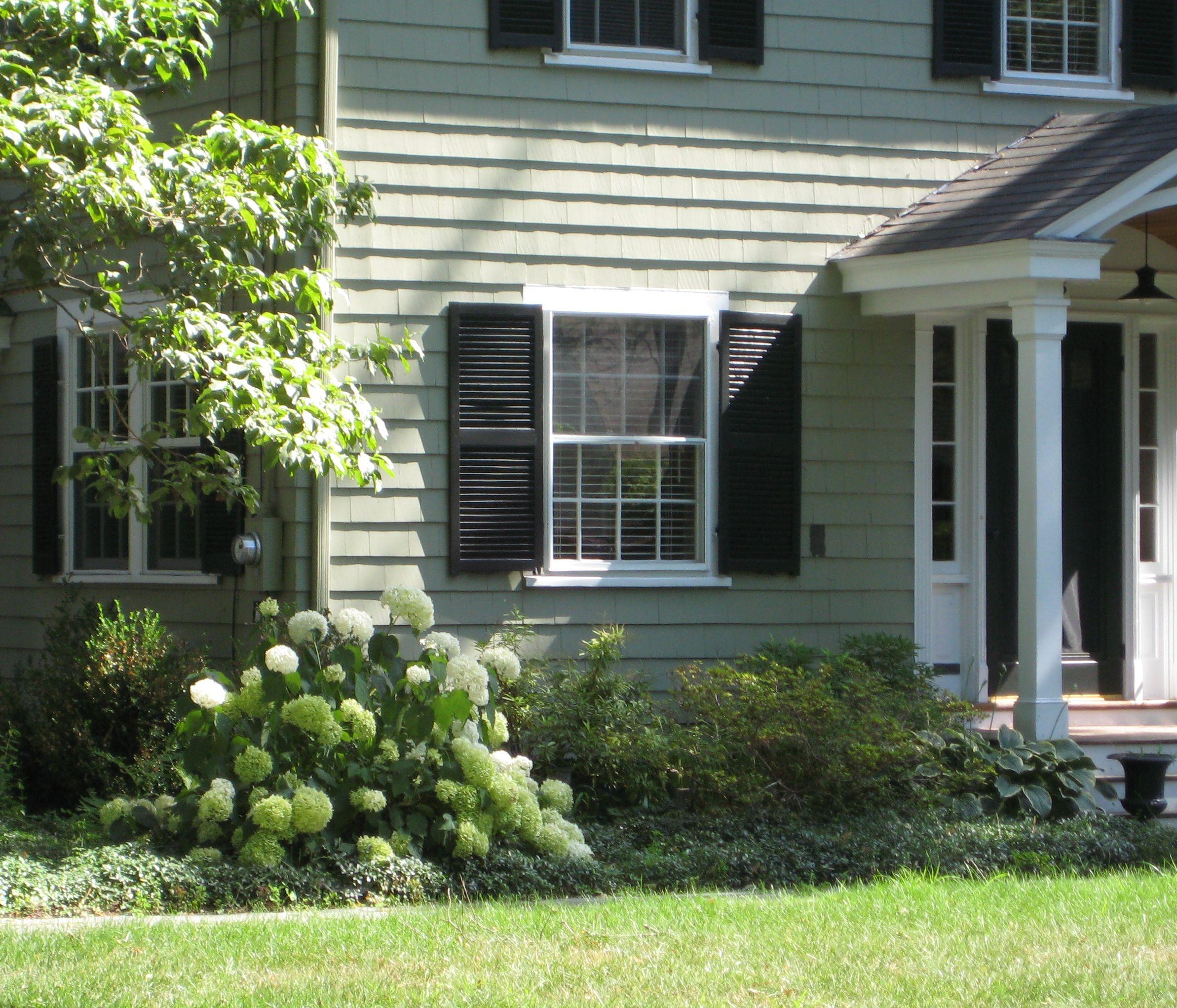 shuttered windows, pale green house, large blooms/leaves hostas ...