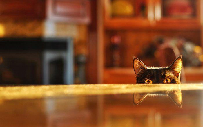 katze erziehen und sie verstehen k nnen 40 bilder von niedlichen katzen tierwelt pinterest. Black Bedroom Furniture Sets. Home Design Ideas
