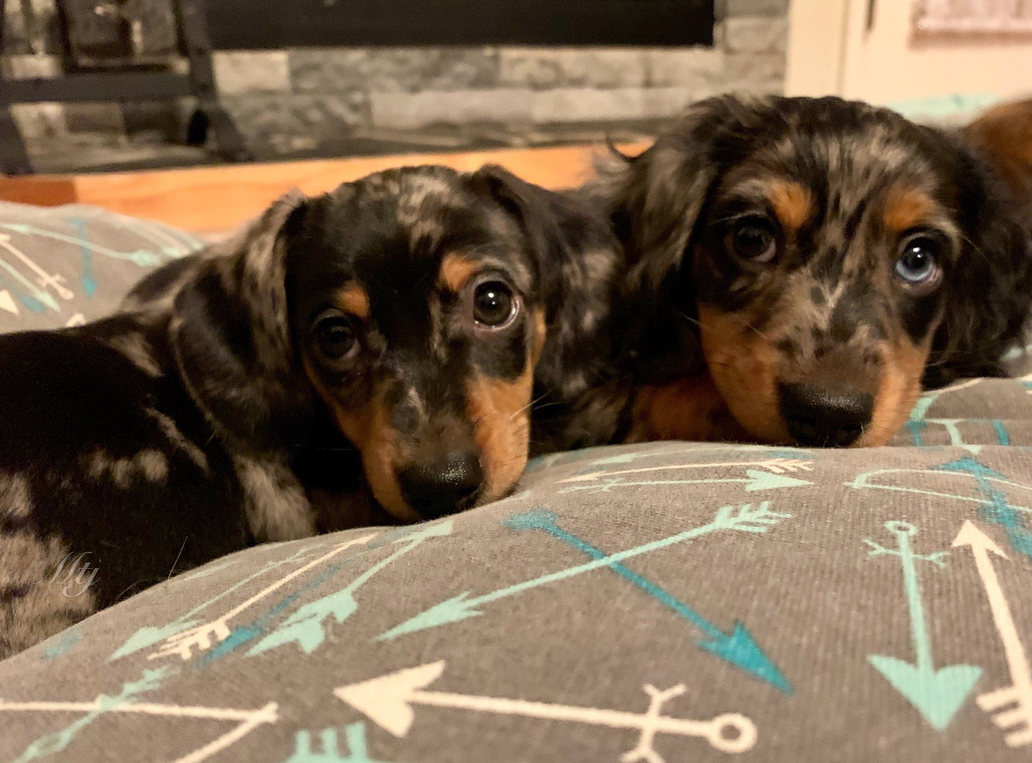 Pin By Liza Sobhani On Doxalicious Dachshund Pets Animals