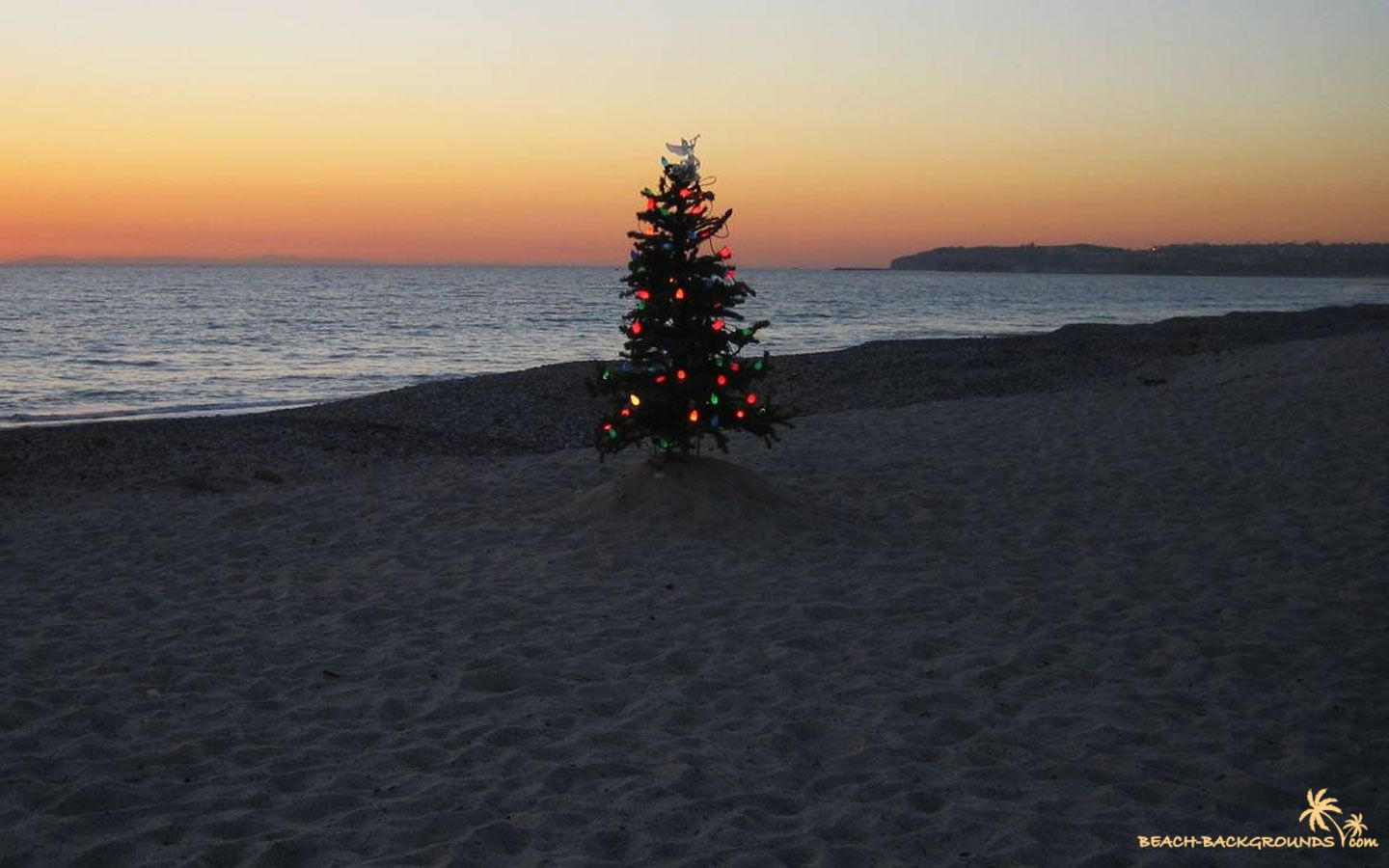 Image detail for -Christmas tree on a beach