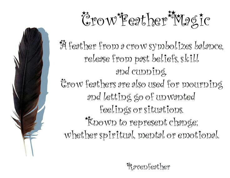 Crow Feathers Crow Feather Feather Magic Feather Meaning