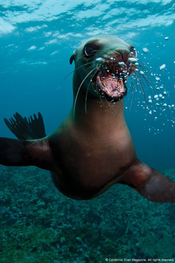 Perfect! California Sea Lion...reminding us to smile! :D