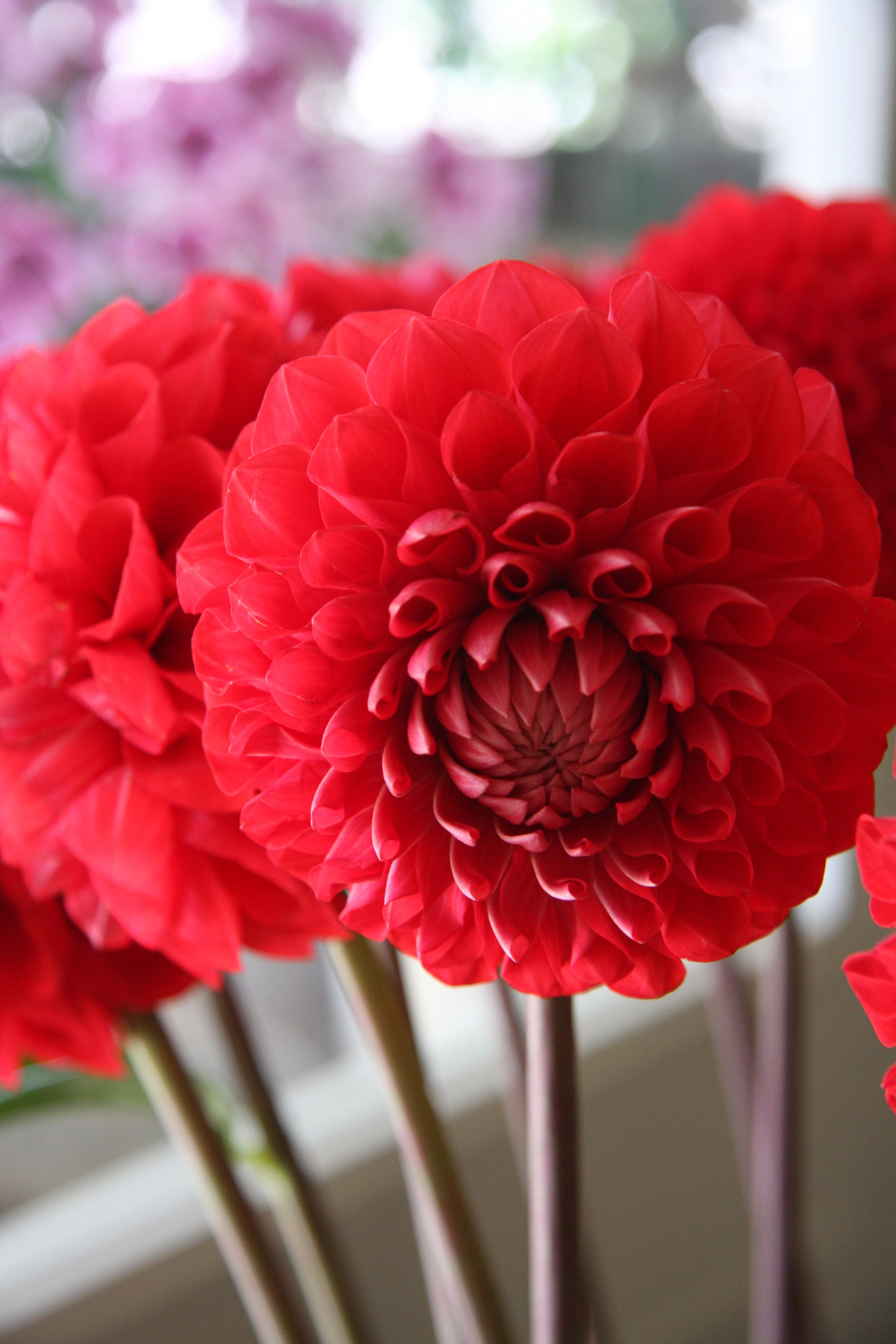 Dahlias Are Pretty For July But A Little On The Higher End Price