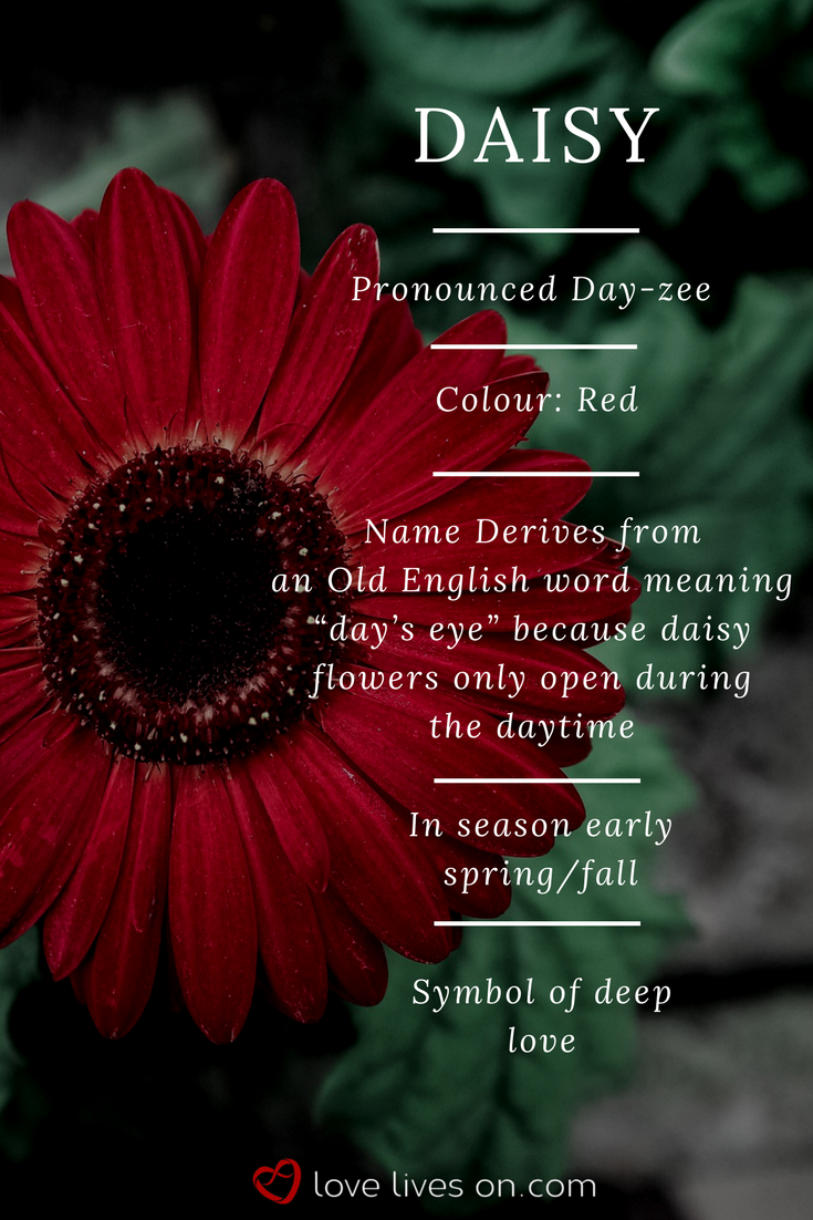 Pin On Funeral Flower Meanings