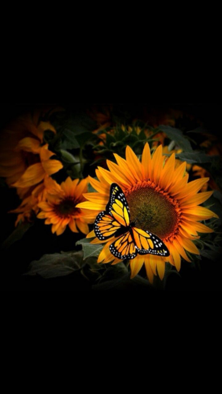 Pin by Kathy Vena on Wallpaper   Butterfly wallpaper ...