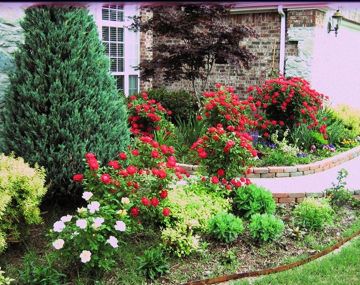 Landscaping with knock out roses | Gardening | Pinterest ...