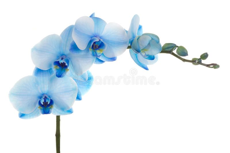 Orchid Flower Isolated On White Background Ad Flower Orchid Isolated Background White Ad Orchid Flower Orchids Flowers
