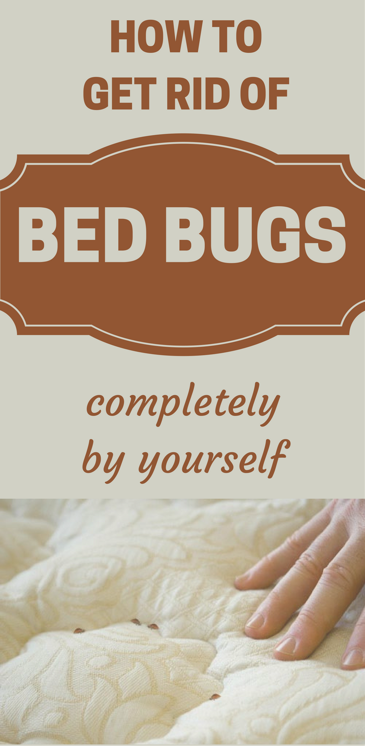 How To Get Rid Of Bed Bugs Completely By Yourself Rid of