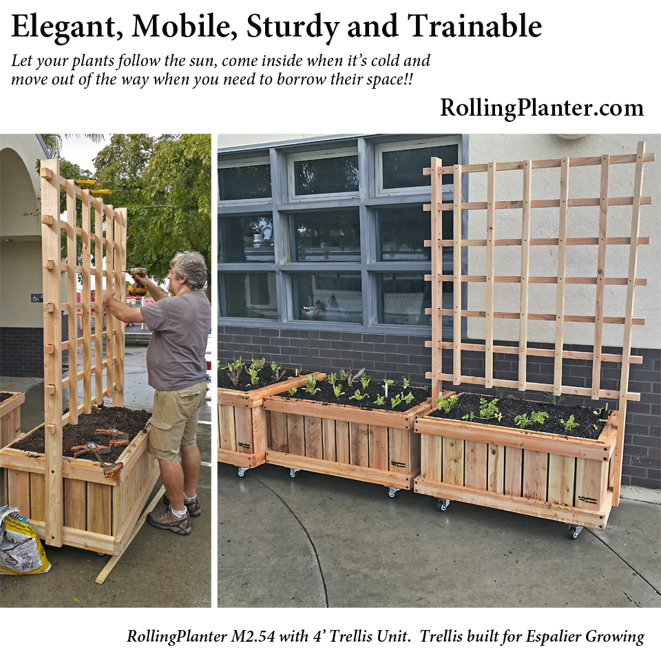 Trellises For Rolling Planters Strong Designed And Fabricated Trellis Grow Vegetable Vines Flower Vines B Planter Trellis Flowering Vines Tall Potted Plants