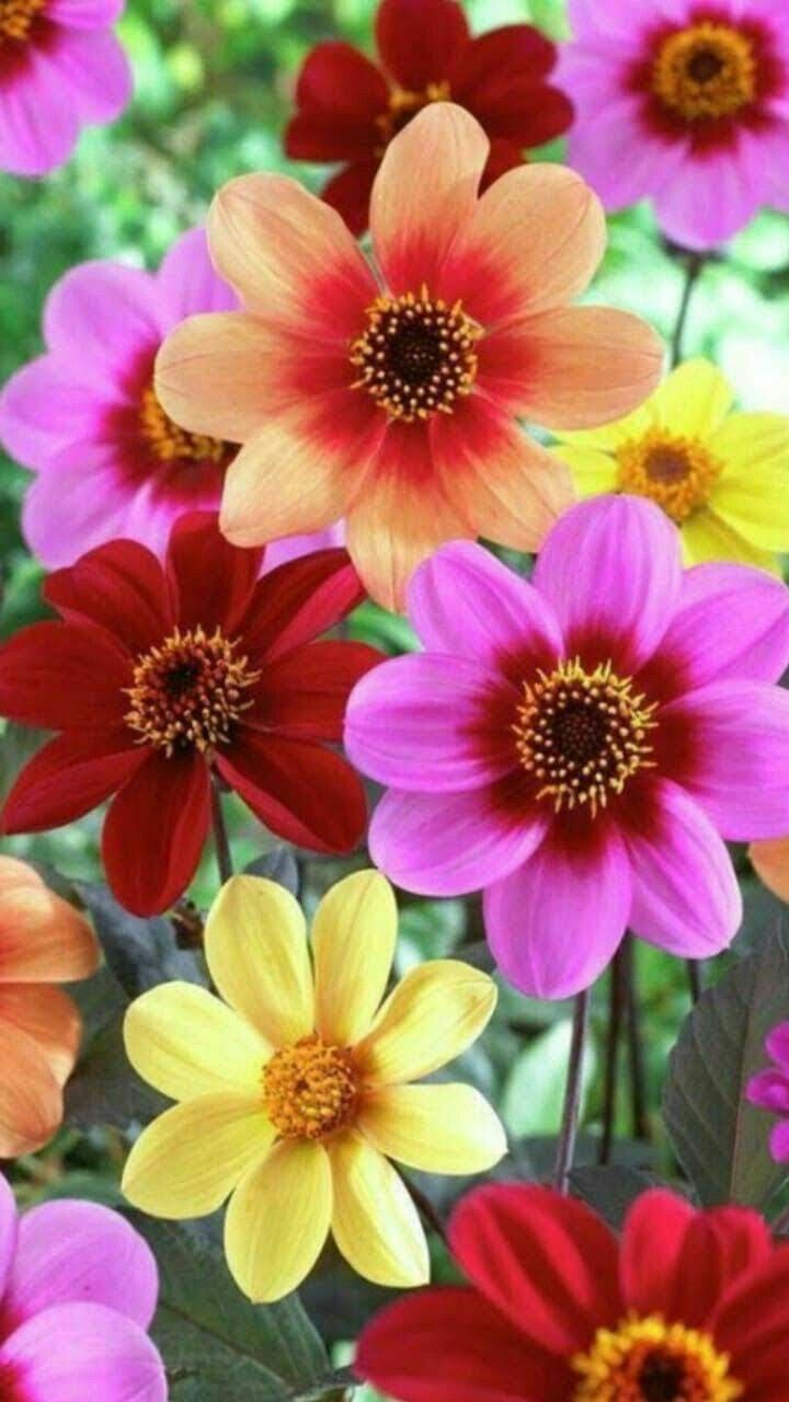 Pin by dianne marie on wallpaper pinterest flowers beautiful