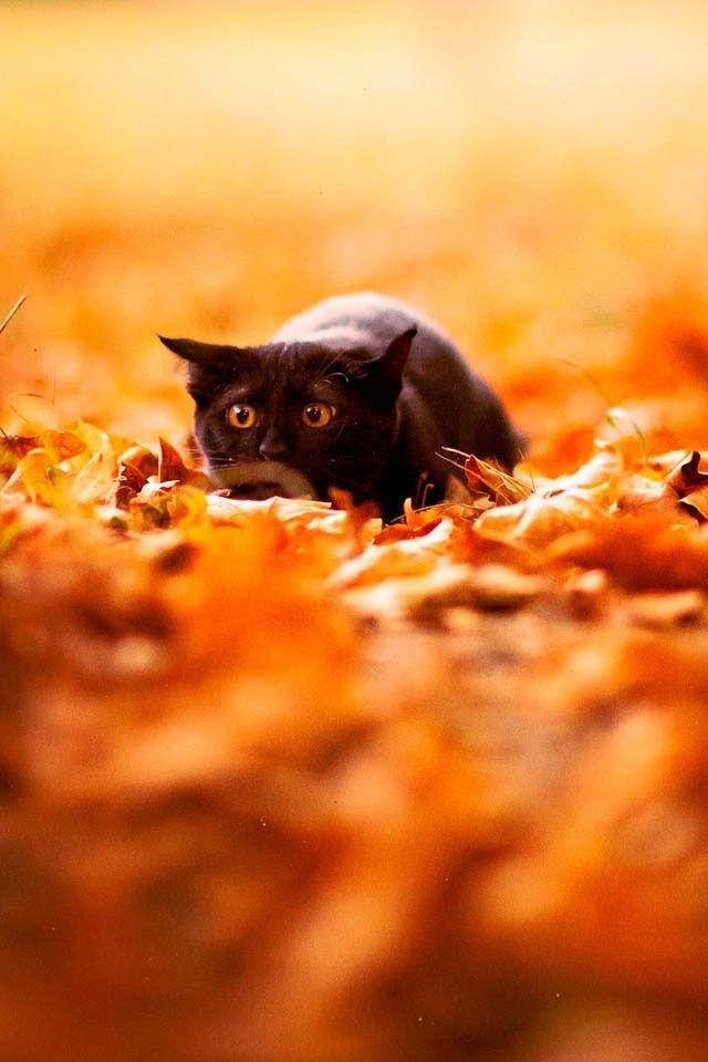 Black Cat On Orange Autumn Chats Noirs Mignons Chat Fou Petit Felin