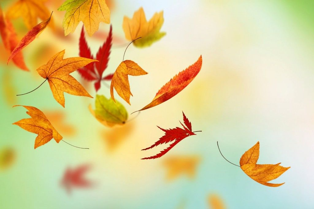 The Sparefoot Blog Moving Storage And Organization Advice Fall Wallpaper Autumn Leaves Free Facebook Cover Photos Falling leaves moving wallpaper