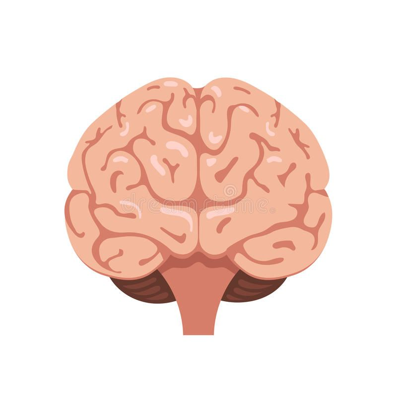 Download Brain front view icon. Human brain front view icon ...