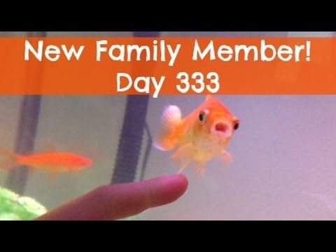 New Family Member! | Day 333 | Finding Wende