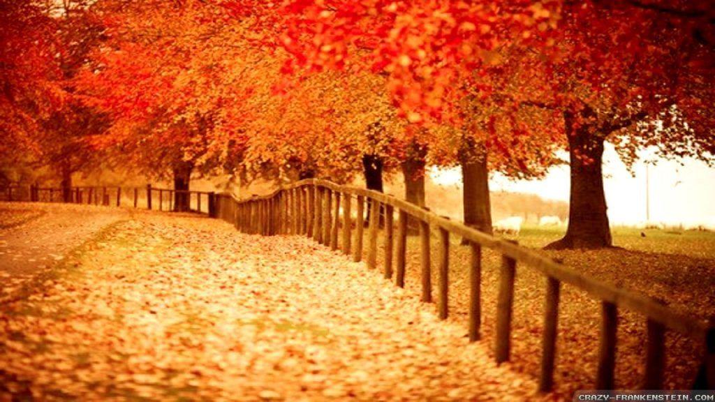Autumn Wallpaper 1920x1080 76 High Quality Graphics New Wallpapers Fall Desktop Backgrounds Fall Wallpaper Desktop Wallpaper Fall