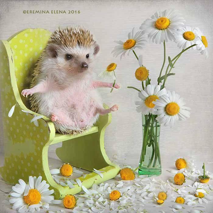 пожелать хорошего настроения картинки с милыми животными чтобы кухня