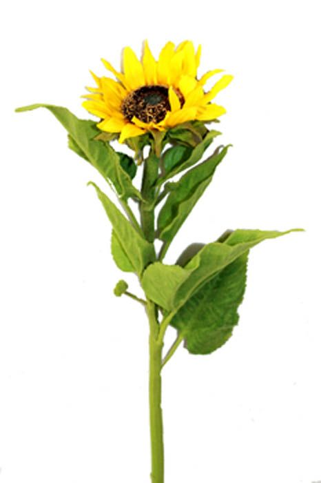 Long Stem Sunflower Plants Garden