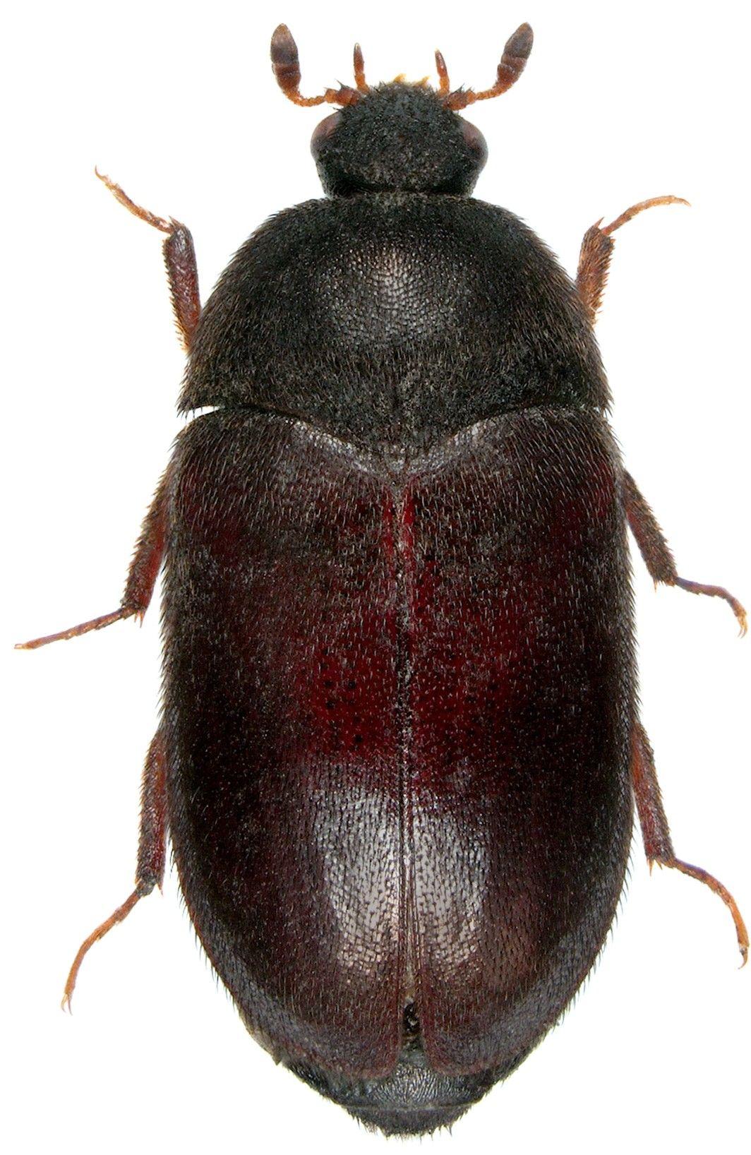 Leather Jacket Bug Spray