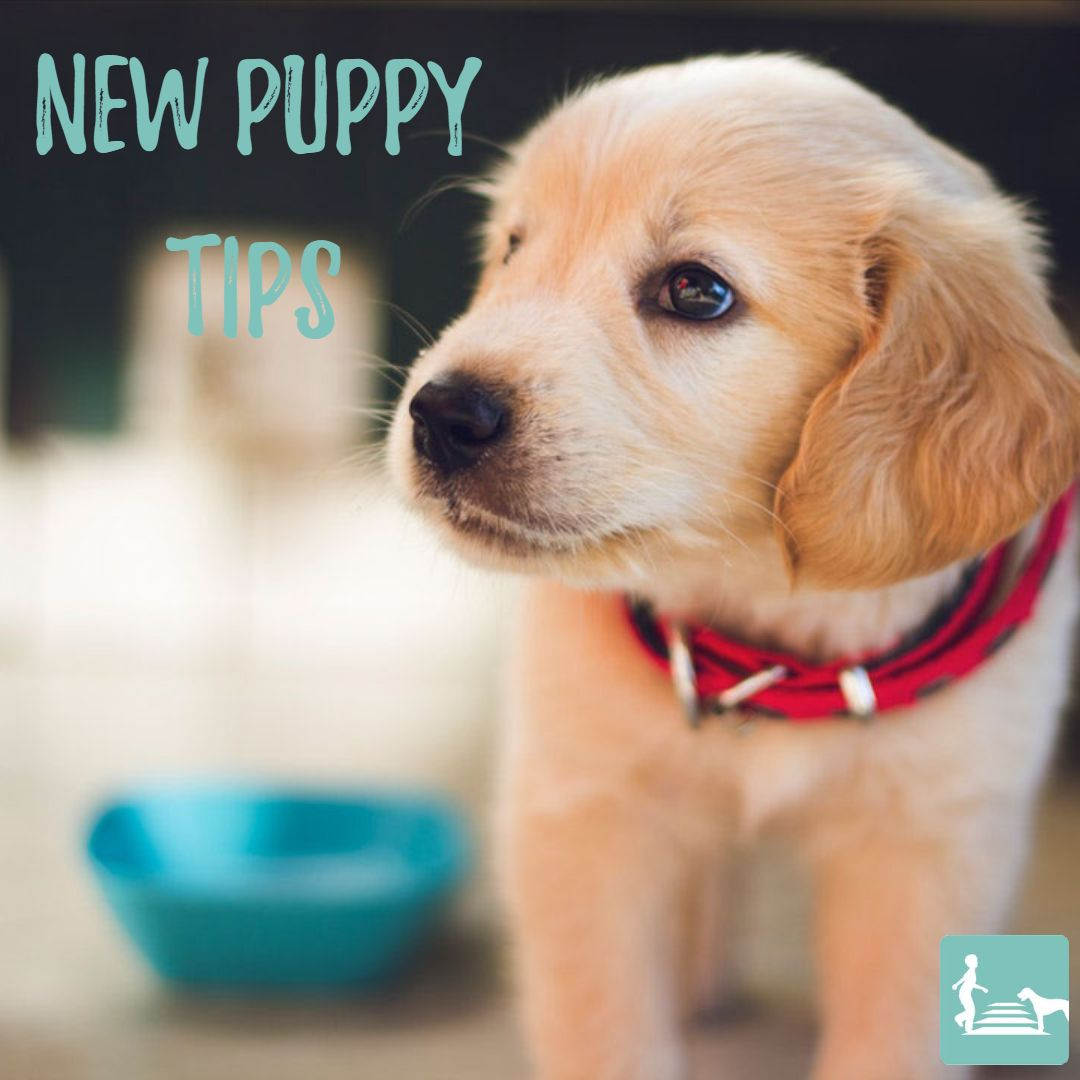 Puppies Are Adorable Snuggly And A Lot Of Work Here Are Some Great Tips For Surviving The Puppy Stage Prepare Your H Puppies Puppy Training Puppy Stages