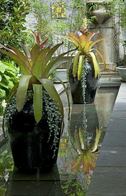Jarrones en espejo de agua jardines pinterest espejo for Espejos para jardin