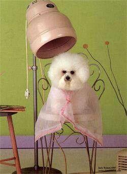 Pampered Pup Pet Groomers Dog Grooming Pet Grooming