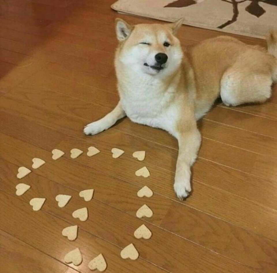 Hey Hooman Do You Come Here Often Funny Dog Memes Shiba Inu Cute Dogs