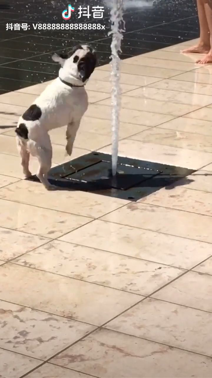 Funny And Cute Dog Puppy Cute Adorable F Adorable