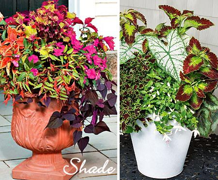 Potted Plants for Shade flowers Pinterest Plants Gardens