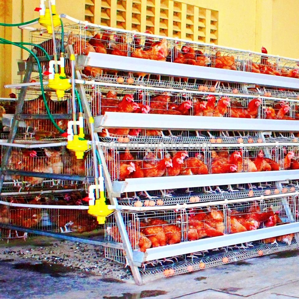 Innaer Factory Chicken Cage Layer Poultry For Chicken Farm