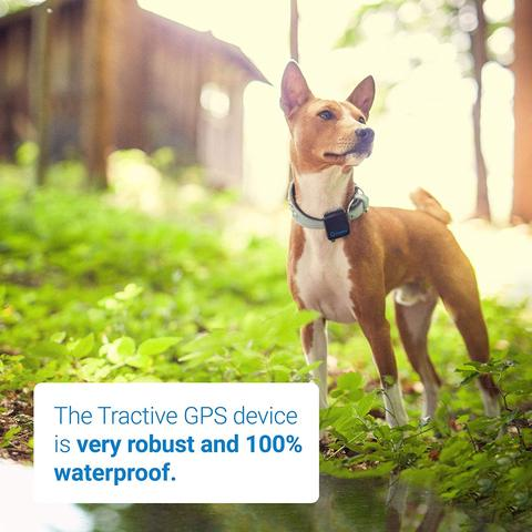 Pets Gps Tracker Activity Monitor Tinkle Gem Petaccessories Petproducts Petscare Pethealth Pets Petcare Gadgets Access Pet Gps Gps Tracker Gps