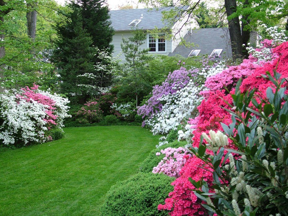 colorful azalea garden