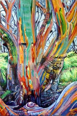 Snow Gum Google Search Tree Art Rainbow Eucalyptus