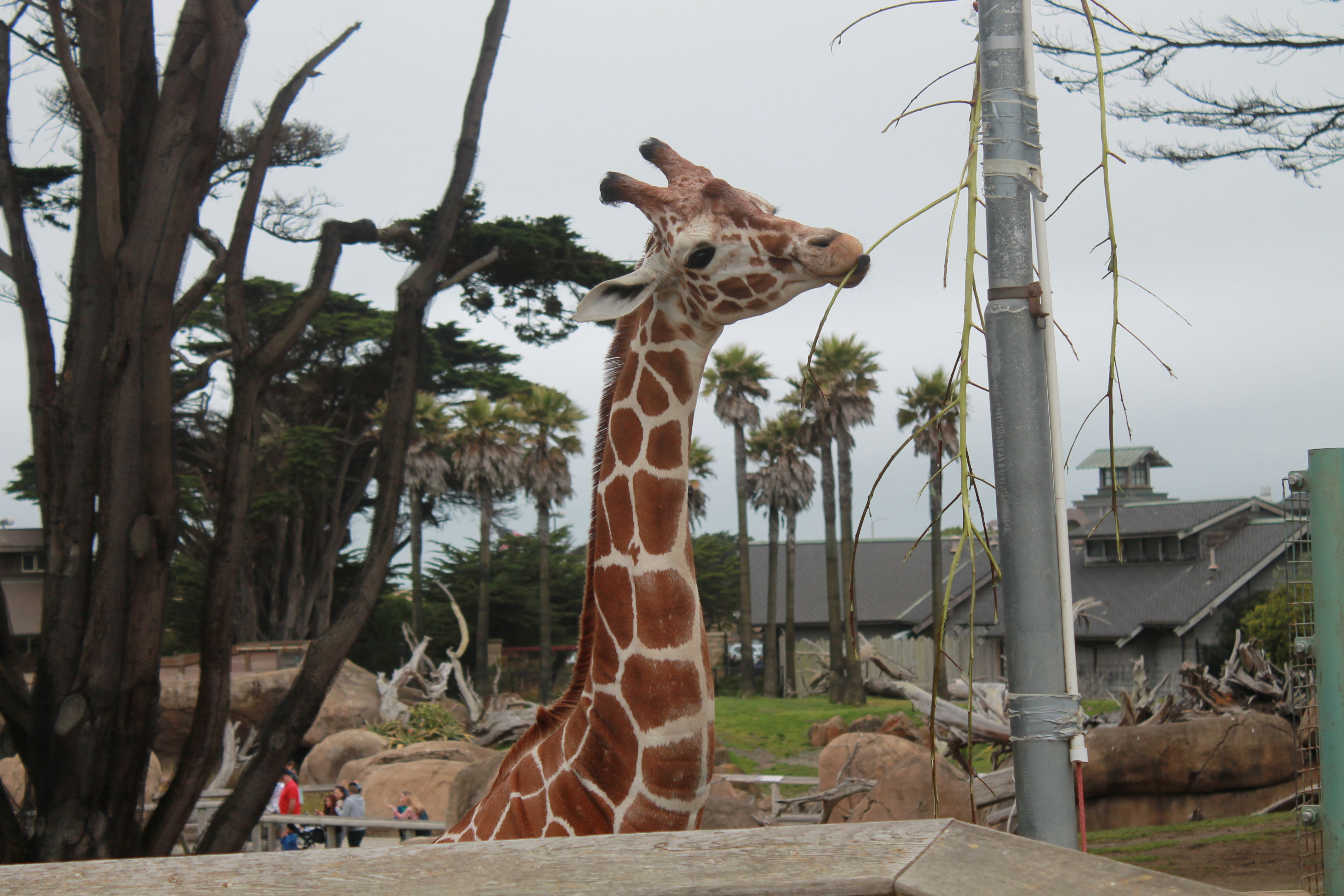 Went to the zoo 7/1/2014