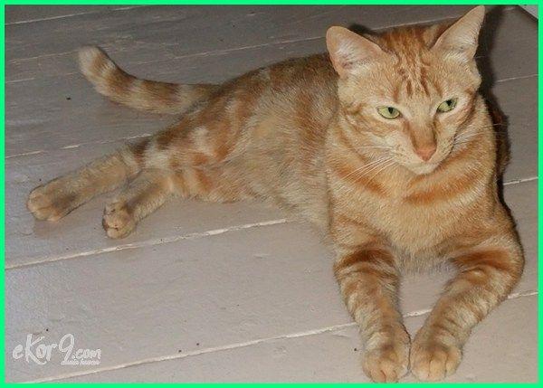 Nama Kucing Betina 81021 Nama Untuk Kucing Comel Lucu Dan Unik