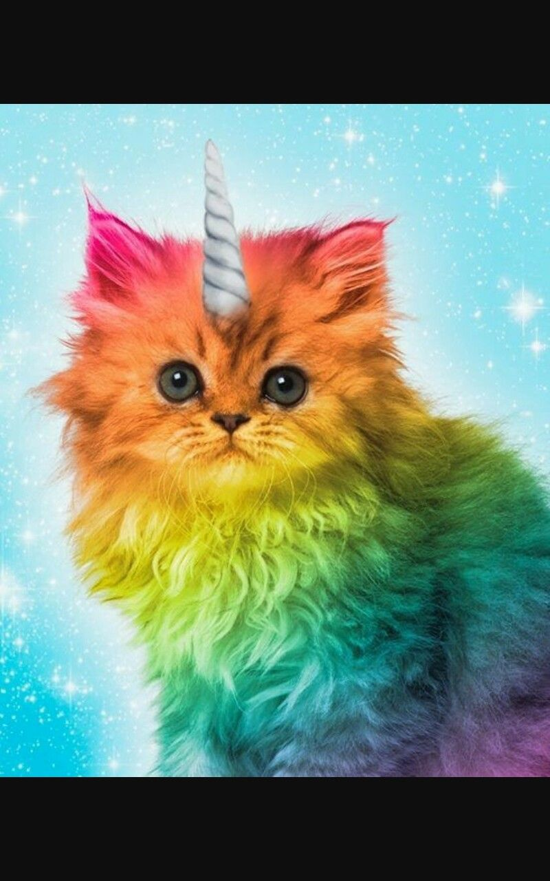 UNICORN image by Emily King Rainbow cat, Cats and
