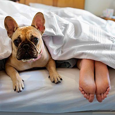 Reasons You Aren T Sleeping Sleeping Dogs Dog Bed French Bulldog