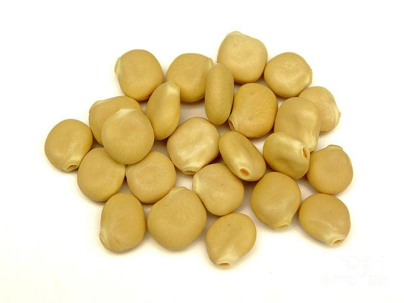 فوائد الترمس وطرق استخدامه Vegetables Food Beans