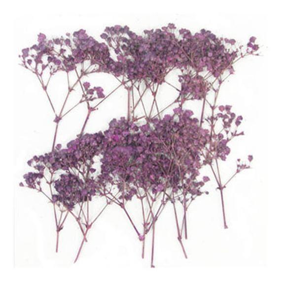 Gepresste Blumen lila Baby Atem 20pcs für Kunst, Handwerk, Kartenherstellung, Scrapbooking