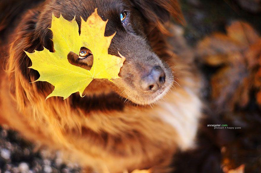 Psíci sa tešia z jesenného počasia. Nič menej, nič viac – Doba Magazín