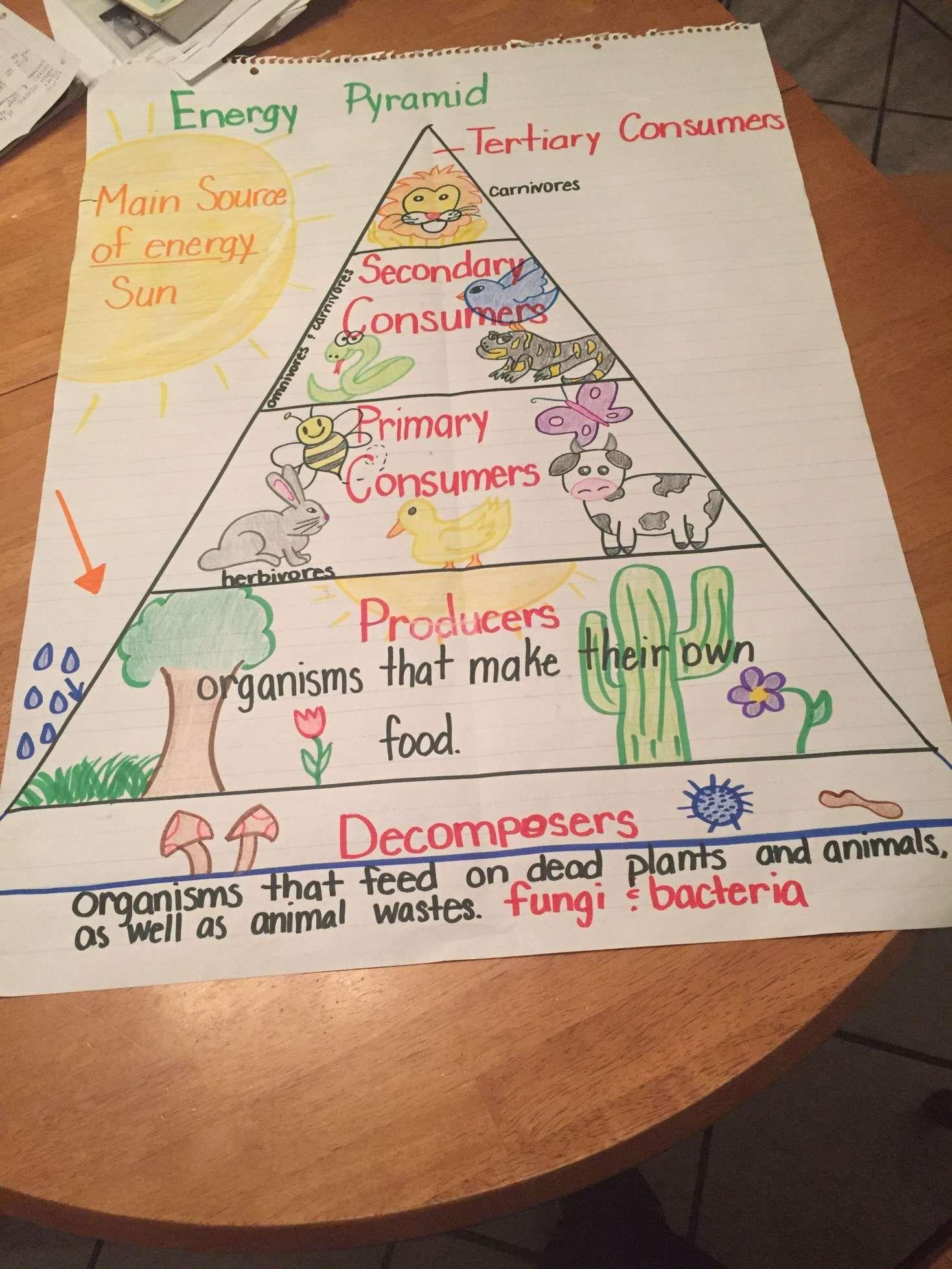 medium resolution of 15+ Energy Pyramid Worksheet 4Th Grade   5th grade science