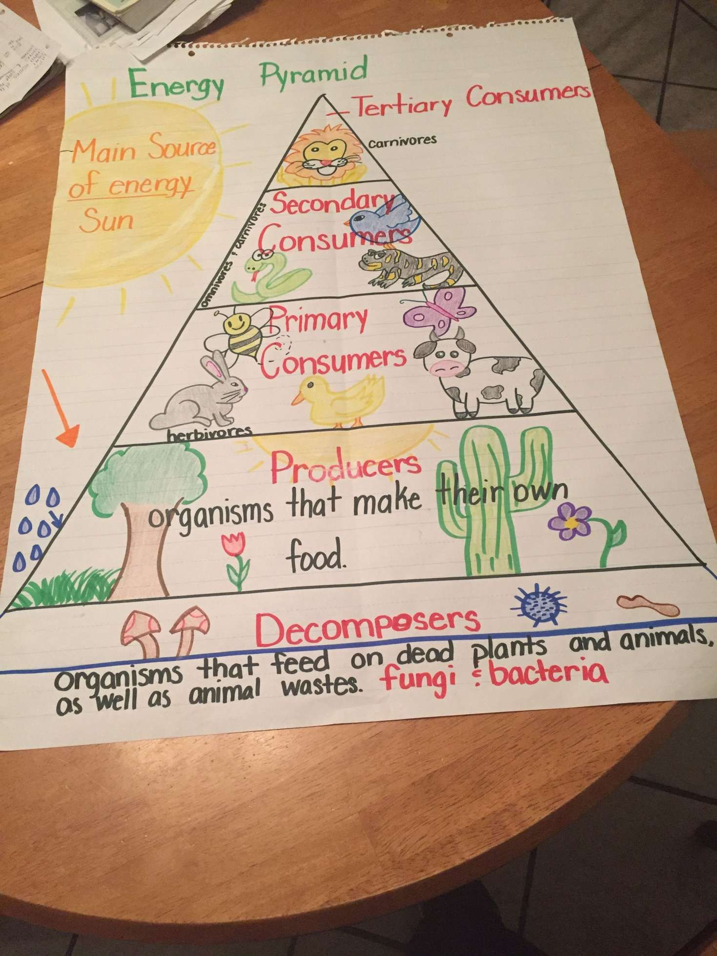 15 Energy Pyramid Worksheet 4th Grade In