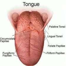 Dry Tongue And Throat
