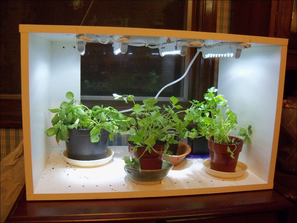 cheap indoor garden Indoor garden, Indoor vegetable