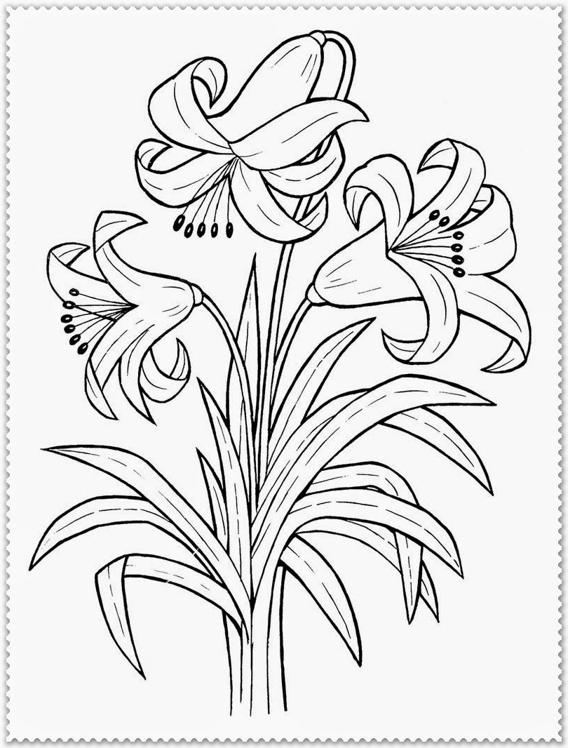 Spring Flower Coloring Pages Free Spring Flower Coloring Pages