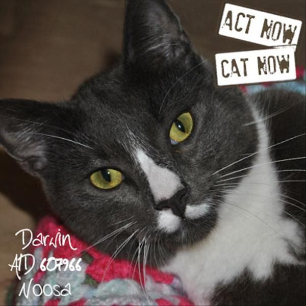 Hello There I M Darwin I M A Special Boy Who Would Suit Any Home And Just Love Couch Sitting Playing With Toys And A Pleasant Stroll A With Images Adoption Cats Animals